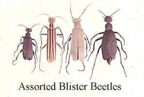 assorted_beetles.jpg